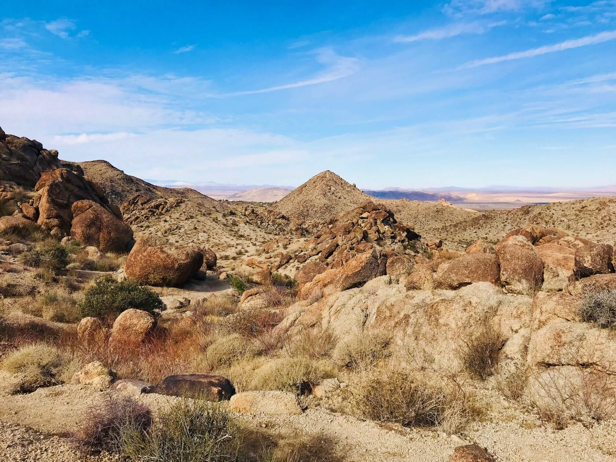 View along the 49 Palms Oasis Trail
